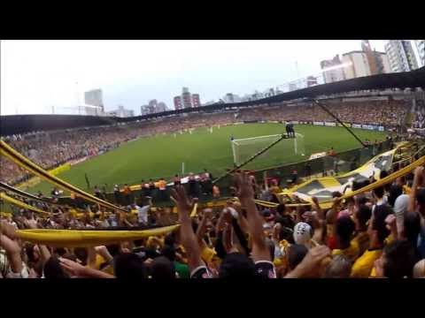 """Majestoso"" Barra: Os Tigres • Club: Criciúma"