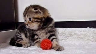 Cutest Cat Moments. Don't worry, my baby kitten. AWW