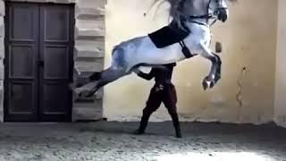 Лошадка 😚😚