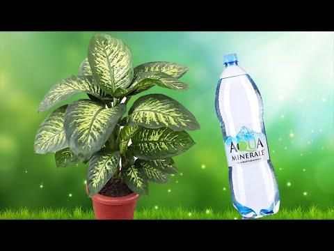 Можно ли поливать цветы минеральной водой и зачем?