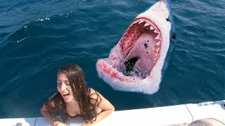 she fell into the shark tank, then..