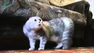 Говорящие котэ :D