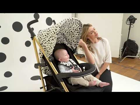 Catwalk Collection by Abbey Clancy and the Gold Dalmatian MB51