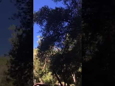 Video Of Cerro Alto Campground, CA