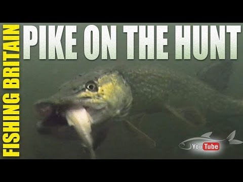 Fishing Britain – Pike on the Hunt