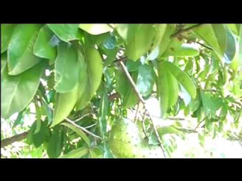 Pagtatasa para sa kuko halamang-singaw kung paano gawin