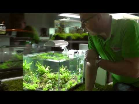Dennerle Scaper's Tank - Aquascaping leicht gemacht