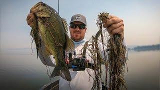 Matt's Back! Topwater Fishing For Big Bass!