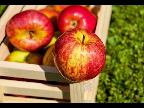 Todo sobre las variedades de manzana