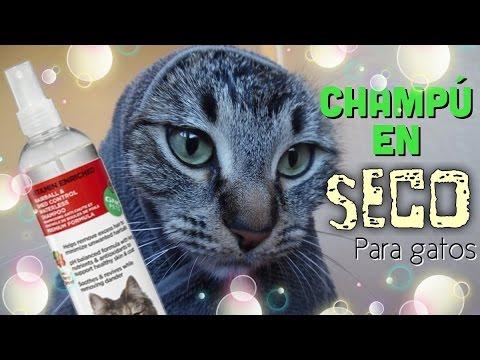 Champú en Seco para Gatos