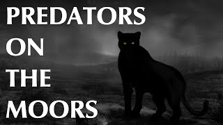 Predators on the Moors