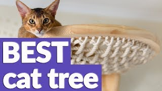 Best Cat Tree In 2019 | 10 TOP RATED Cat Trees