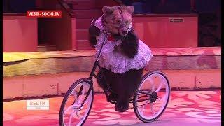 Медведи на велосипеде: в Сочи приехал знаменитый цирк