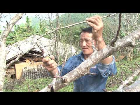Huyện Si Ma Cai sau 13 năm thực hiện Nghị quyết 26