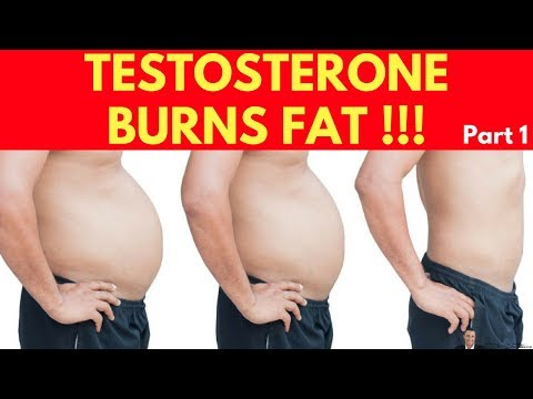 🍽️ Clinically Proven Fact: Testosterone Burns Your Belly Fat Part 1.