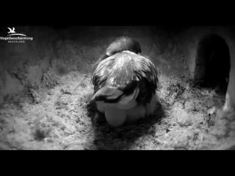 Kingfishers: Fifth Egg - 29.03.17