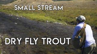 Small Stream Dry Fly Nirvana | Dubois Wyoming