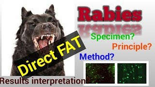 Direct Fluorescent Antibody Test for Rabies/Rabies/Rabies infection/Rabies virus/STAR LABORATORY