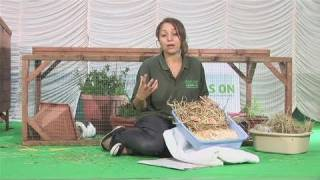 How To Choose Guinea Pig Bedding