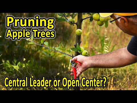 Training and Pruning Apple Trees – Central Leader or Open Center ...