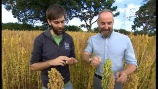 Quinoa Is Newest Crop For Shrosphire Farmers