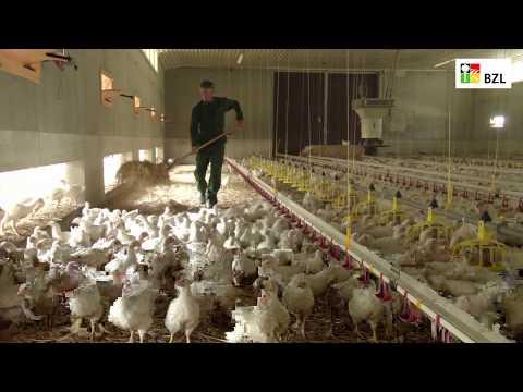 Tierwohl in der Geflügelhaltung: Hähnchenmaststall mit großzügigem Auslauf