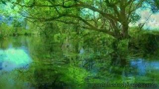 作業用BGM森の清流・野鳥の声~森林浴~NatureSound