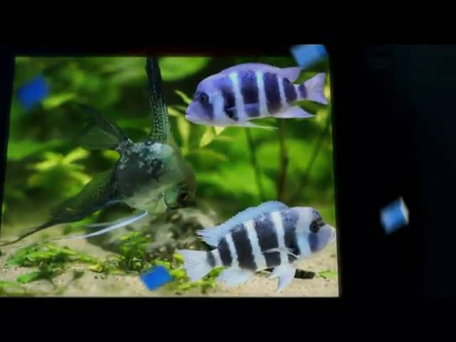 Tropical Fish Wholesale Supply Virginia-Tropical Fish Supplier