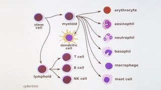 Immunology 101: The Basics and Introduction to our Patient