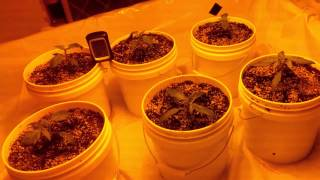 Under $300 for an indoor grow setup!