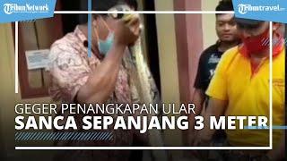 Ular Sanca Sepanjang 3 Meter Ditangkap Warga di Pasar Legi Ponorogo, Sempat Makan Ayam Milik Penjual