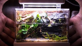 Mini Complete Waterfall Paludarium