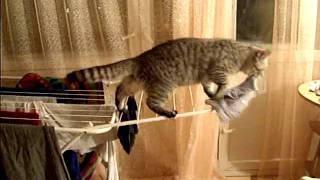 Кот-клептоман и его эпичное падение