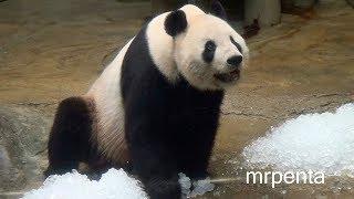 リーリー上野動物園パンダ