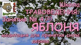 Школа ТРАВОВЕДЕНИЯ - Занятие №4 (2) Яблоня: медитация для принятия силы дерева
