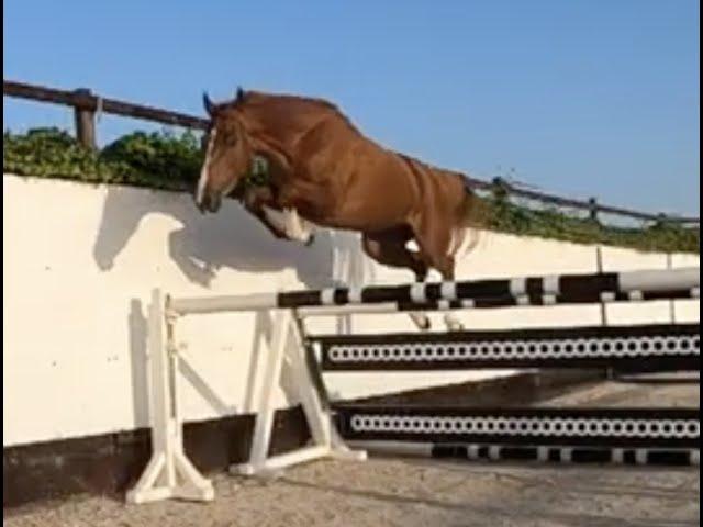 Amy van Klein Statum Z Jumping