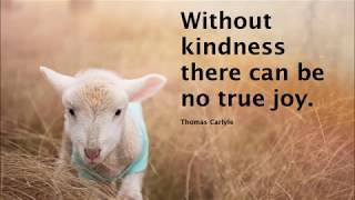 Best Quotes On Kindness
