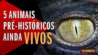 5 Animais Pré Históricos Ainda Vivos | 5 Vídeos Absurdos