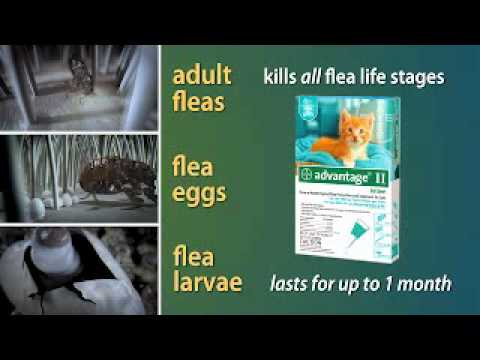 12 MONTH Advantage II Flea Control for Medium Dogs (11-20 lbs) + Tapeworm Dewormer for Dogs (5 Tablets) Video