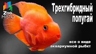 Трехгибридный Попугай - Все о аквариумной рыбке | Рыбка вида - Трехгибридный Попугай