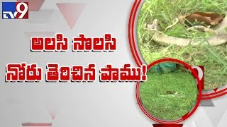Durgada snake dies of exhaustion  - TV9