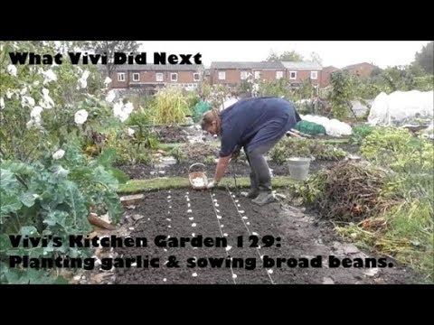 Vivi's Kitchen Garden 129: Planting garlic & sowing broad beans.