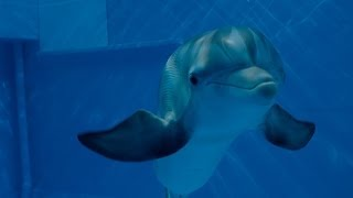 Dolphin Tale 2 (2014) Video