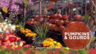 Pumpkins, Gourds, Mums & More!
