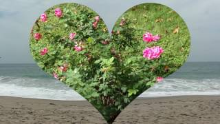 Seaswept     Part 1     {Original Movie Musical Romantic Comedy}