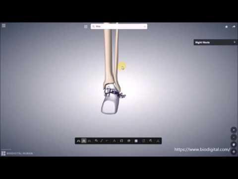 Wie das Pflaster auf Knöchel anzuwenden