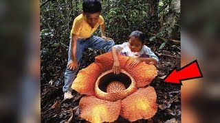 5 Strangest Things Found In The Jungle!