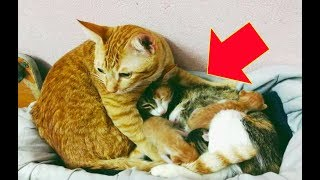 Mama Cat Just Gave Birth To Adorable Kittens When Papa Cat Sees Them, This Happens.