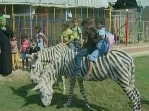 Dirty Zoo-Trick:  Esel im Zebra-Kostüm