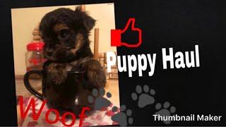 New Puppy Haul 免费在线视频最佳电影电视节目 Viveosnet